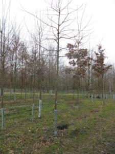 Markus Hiebl, designierter Bürgermeister von Freilassing | Baum der Zukunft