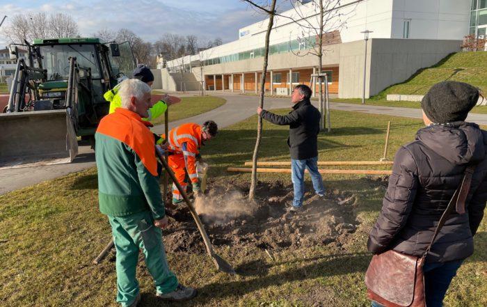 Bürgermeister Markus Hiebl pflanzt die gespendete Traubeneiche
